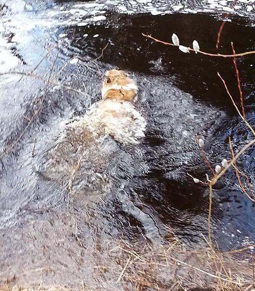 talvi-sylvi-uimaan