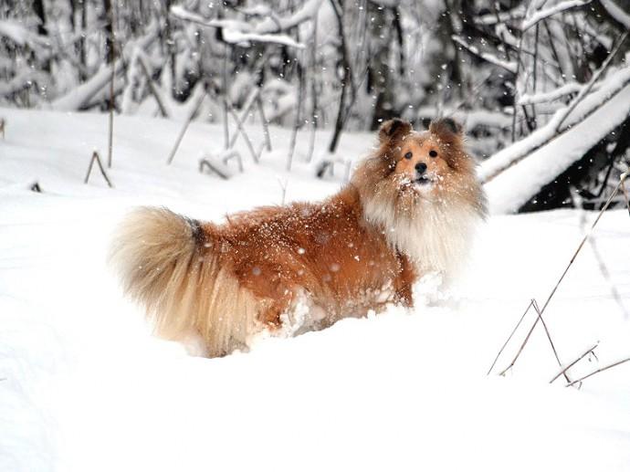 talvi-sylvi1