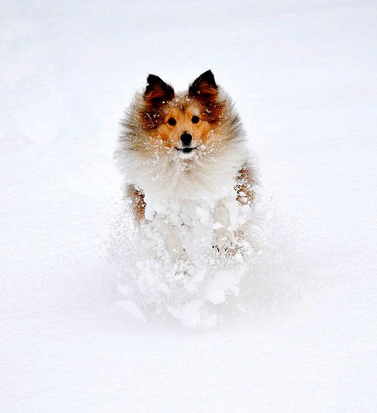 talvi-sylvi2